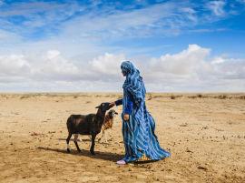 (Français) Exposition «Afrique de l'Ouest, carnet de route» de Martin Gros